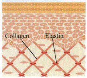 فرایند کلاژن سازی طبیعی پوست و سلول سازی با اثر جذب شدن نخ در بدن فعالتر میشود.