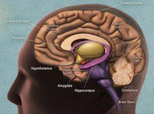 ترشح اندورفین در مغز