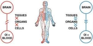 طب سوزنی گردش انرژی و چی در بدن را افزایش می دهد