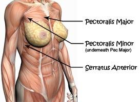 مجموعه عضلههایی که پکتورال خوانده میشوند، در زیر لایه چربی سینه قرار میگیرند