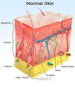 شرایط پوست در حالت معمولی