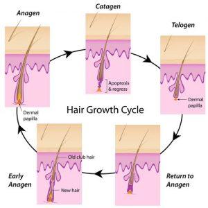 چرخه رشد موهای بدن