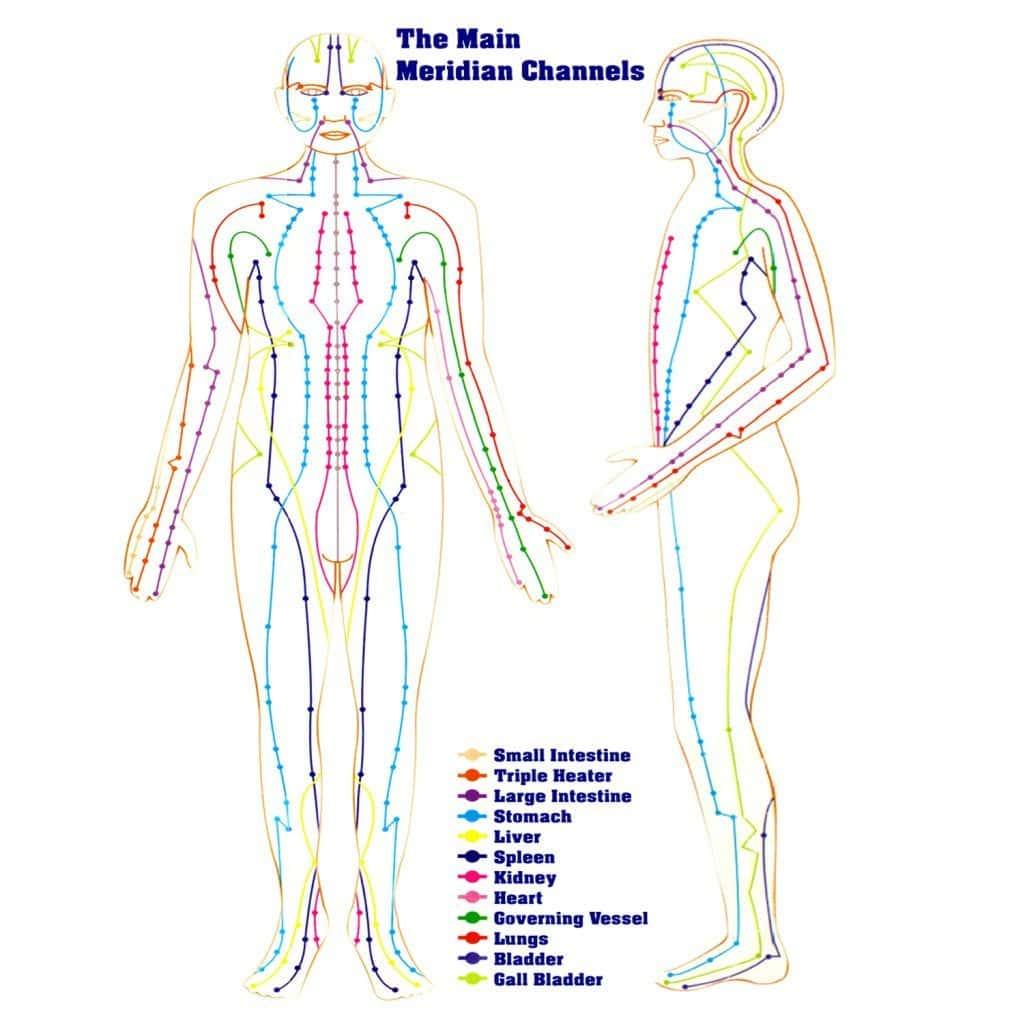 مریدین های بدن