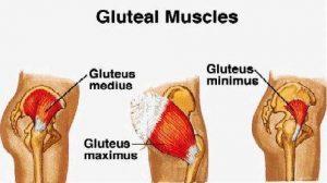 ساختار عضلات باسن و بدنسازی و طب سوزنی برای بزرگ کردن عضلات باسن