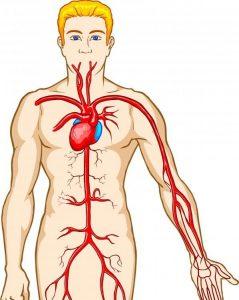 دستگاه گردش خون بدن انسان