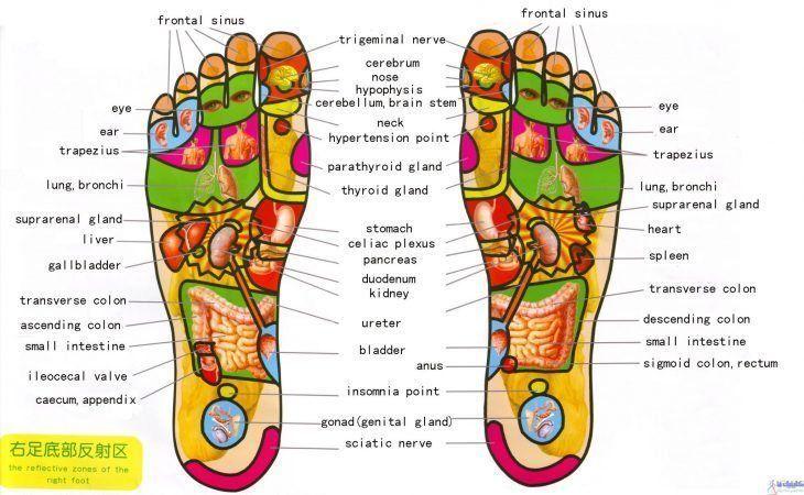 طب سوجوک درمانی یا سوجوک تراپی برای درمان بیماری و درد و زیبایی بدن از طریق کف دست و پا و گوش انجام می شود