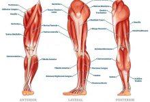 چاق شدن پایین تنه و پاها با روشهای مختلف ورزشی و پزشکی