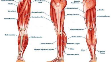تصویر چاق شدن پایین تنه و پاها با روشهای مختلف ورزشی و پزشکی