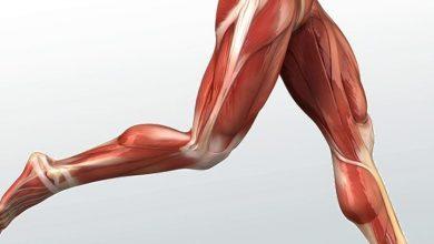 Photo of تزریق چربی به ران پا و پروتز ران پاها برای افزایش سایز لازم