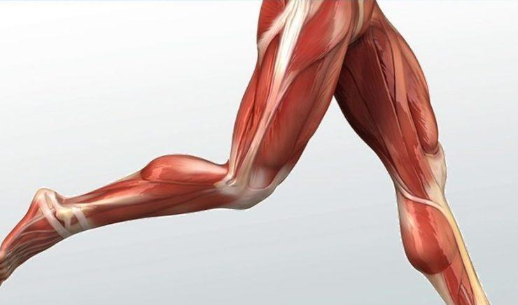 تزریق چربی به ران پا و پروتز ران پاها برای افزایش سایز لازم