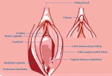جراحی کوچک کردن کلیتوریس(چوچوله زنان)یا هودکتومی چیست؟